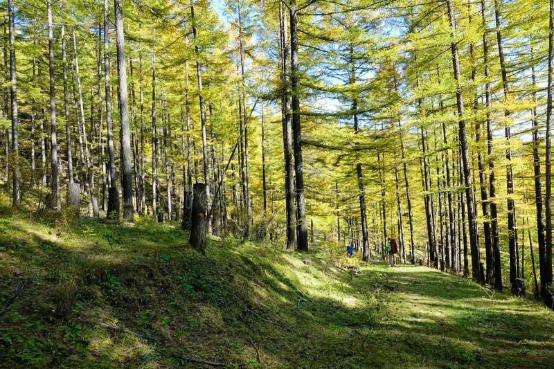 Фотографии природы еловый лес осенью (2)