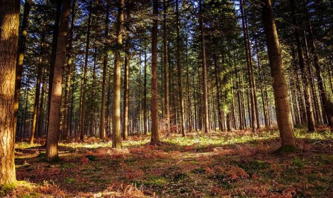 Фотографии природы еловый лес осенью (3)
