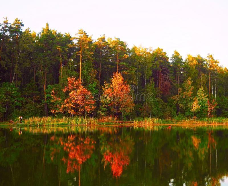 Фотографии природы еловый лес осенью (4)