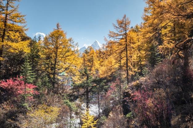 Фотографии природы еловый лес осенью (5)