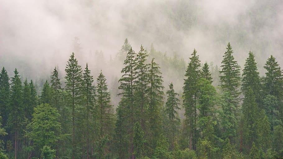 Фотографии природы еловый лес осенью (6)