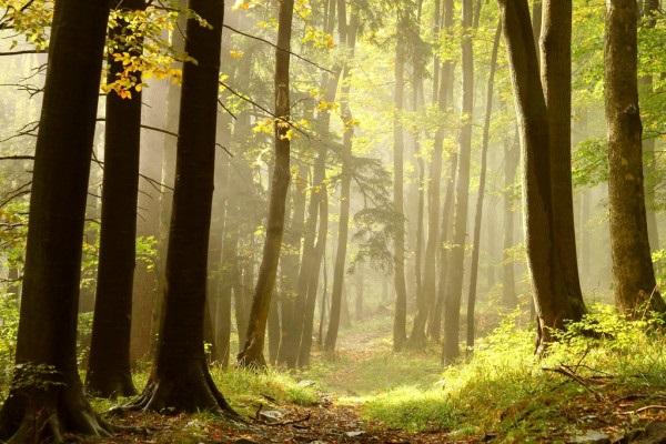 Фотографии природы еловый лес осенью (7)