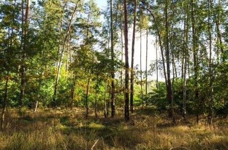 Фотографии природы еловый лес осенью (9)