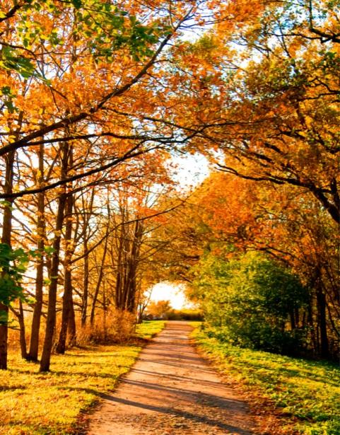 Фотографии природы осенний лес (1)