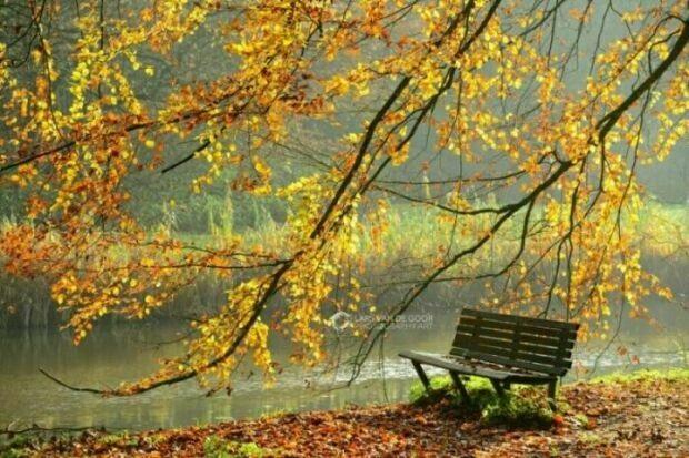 Фотографии природы осенний лес (10)