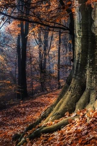 Фотографии природы осенний лес (11)