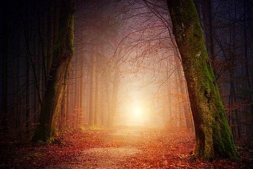 Фотографии природы осенний лес (12)