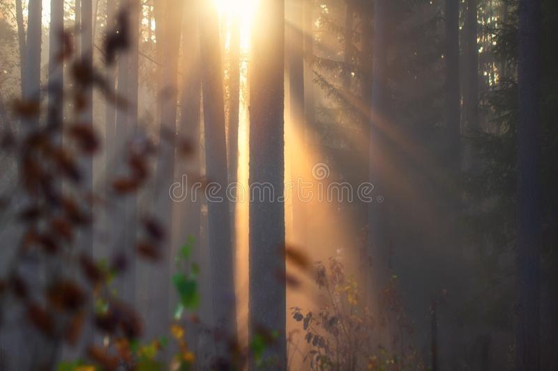 Фотографии природы осенний лес (13)