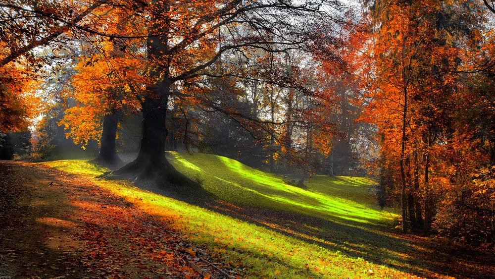 Фотографии природы осенний лес (15)