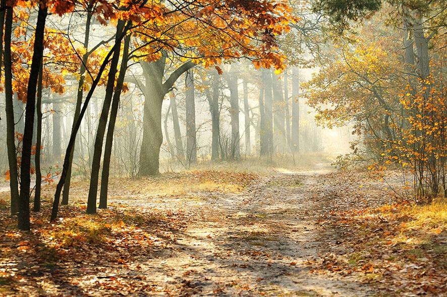 Фотографии природы осенний лес (16)
