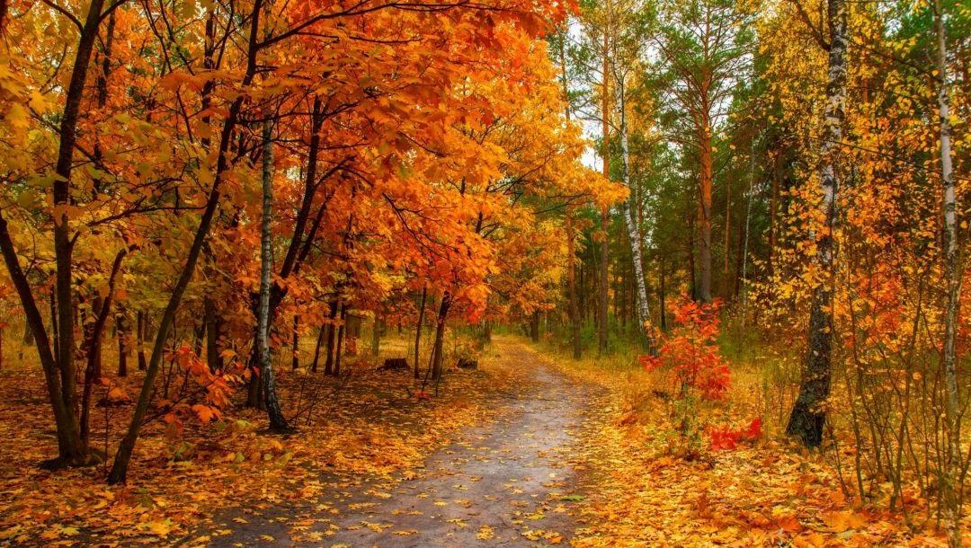 Фотографии природы осенний лес (17)