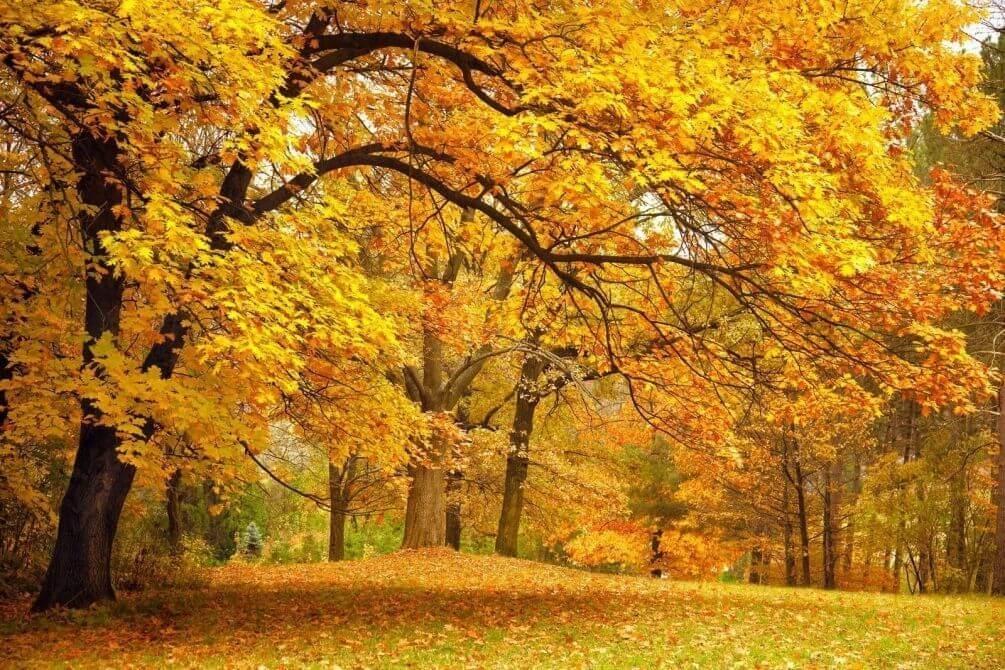 Фотографии природы осенний лес (18)