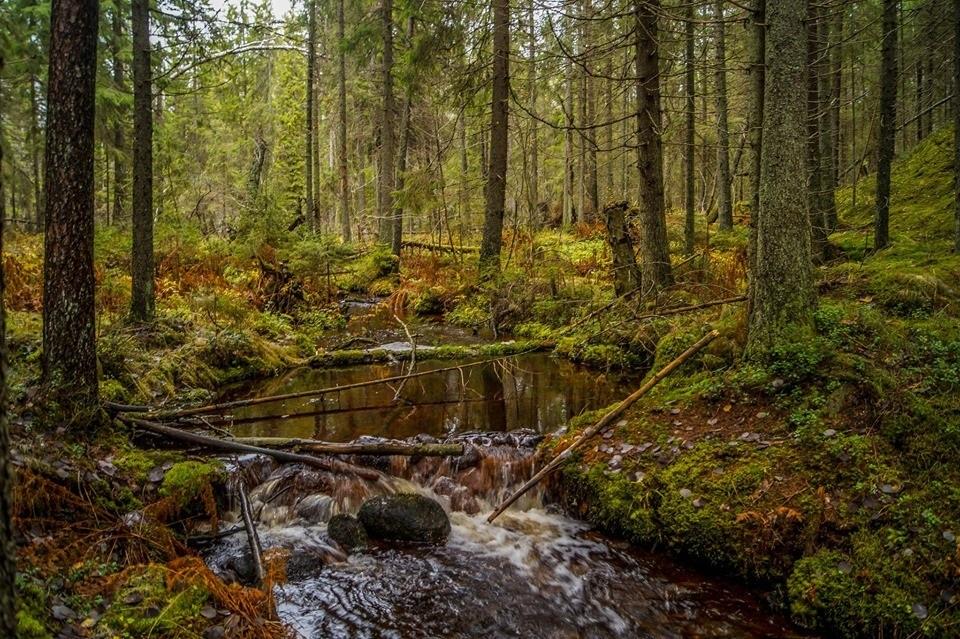 Фотографии природы осенний лес (19)