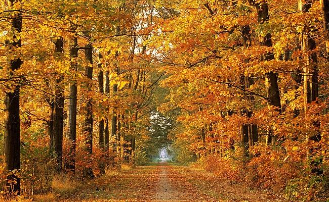 Фотографии природы осенний лес (2)