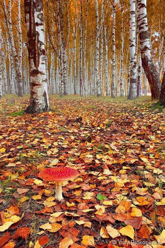 Фотографии природы осенний лес (20)