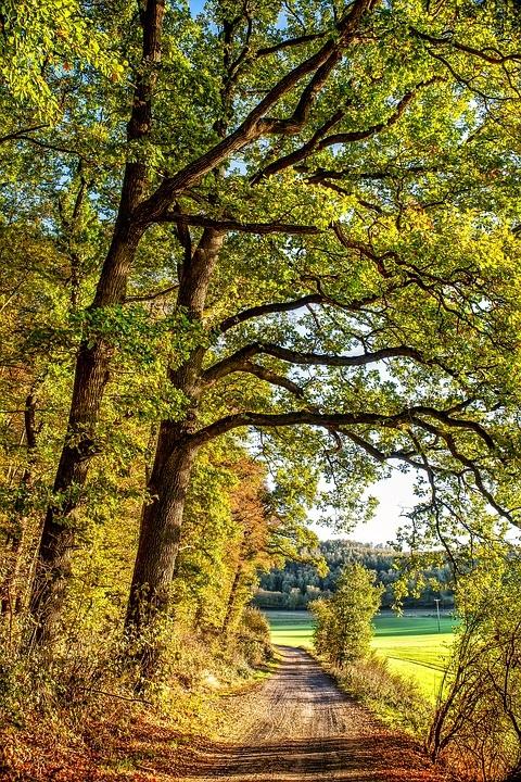 Фотографии природы осенний лес (21)