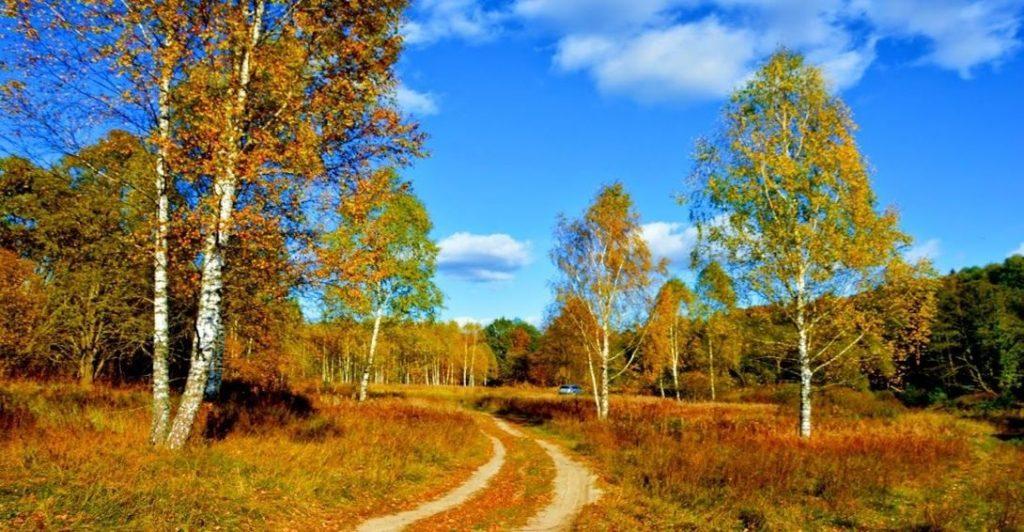 Фотографии природы осенний лес (22)