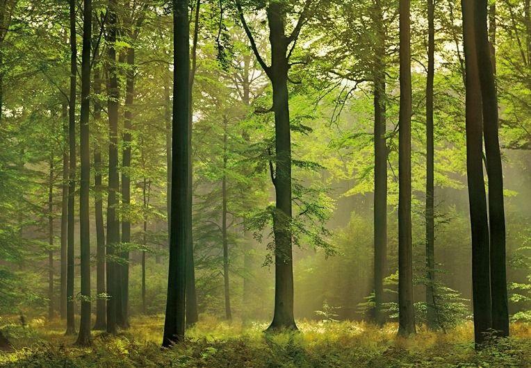 Фотографии природы осенний лес (3)
