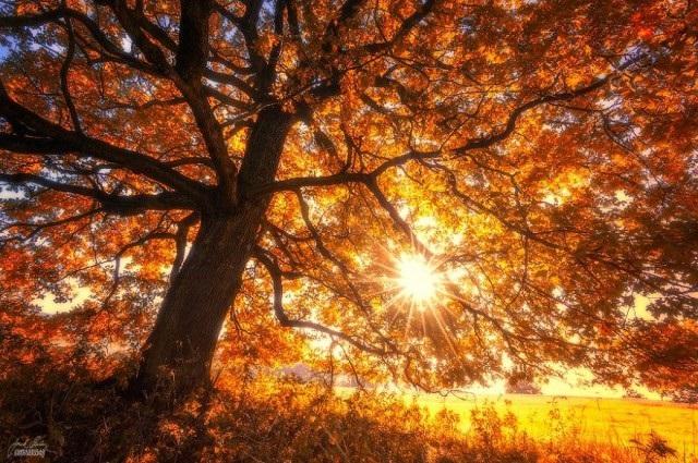Фотографии природы осенний лес (4)