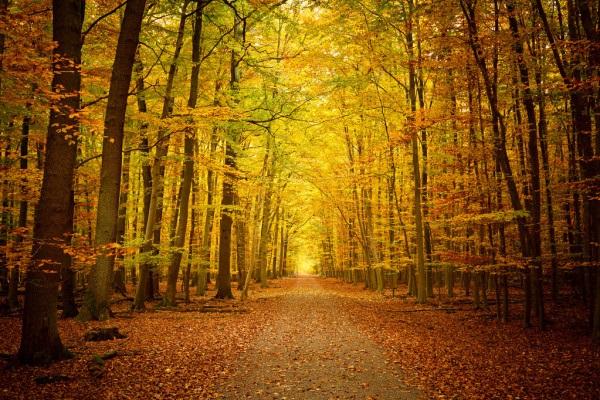 Фотографии природы осенний лес (5)