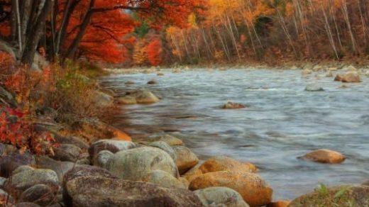 Фотографии природы осенний лес (6)