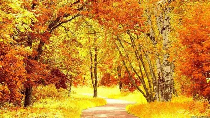 Фотографии природы осенний лес (7)