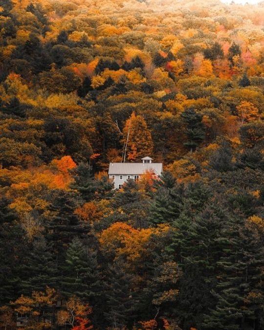 Фотографии природы осенний лес (8)