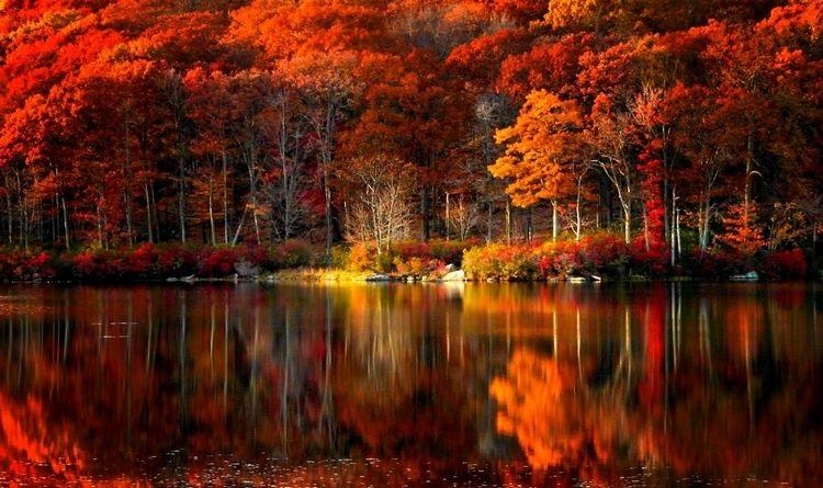 Фотографии природы осенний лес (9)