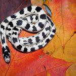 Что значит видеть во сне бело-черную змею?
