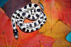 Что значит видеть во сне бело черную змею