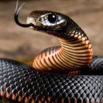 Что значит сон об убийстве змеи?