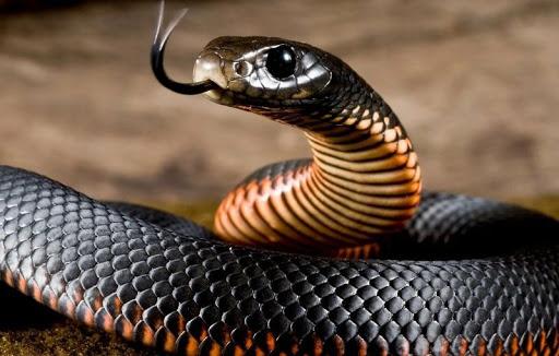 Что значит сон об убийстве змеи