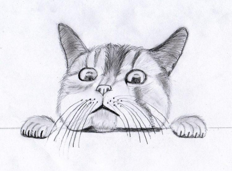 Няшные картинки для срисовки для лд (1)