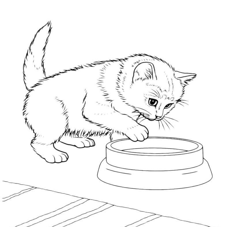 Картинки для срисовки котята милые (12)