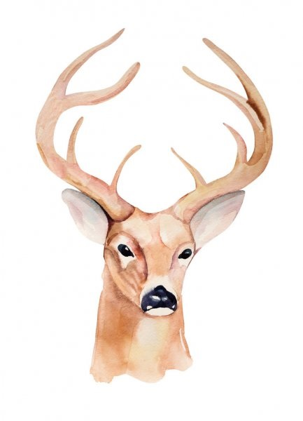Картинки олень для срисовки (13)
