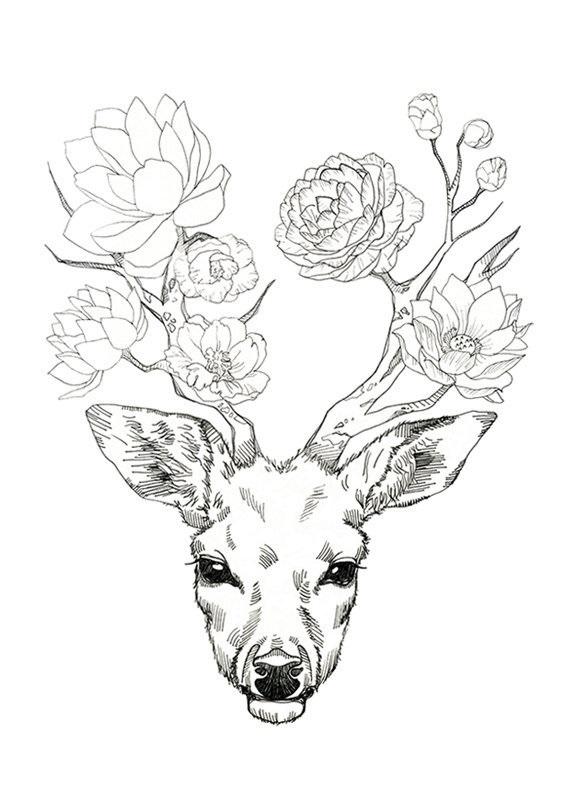 Картинки олень для срисовки (14)