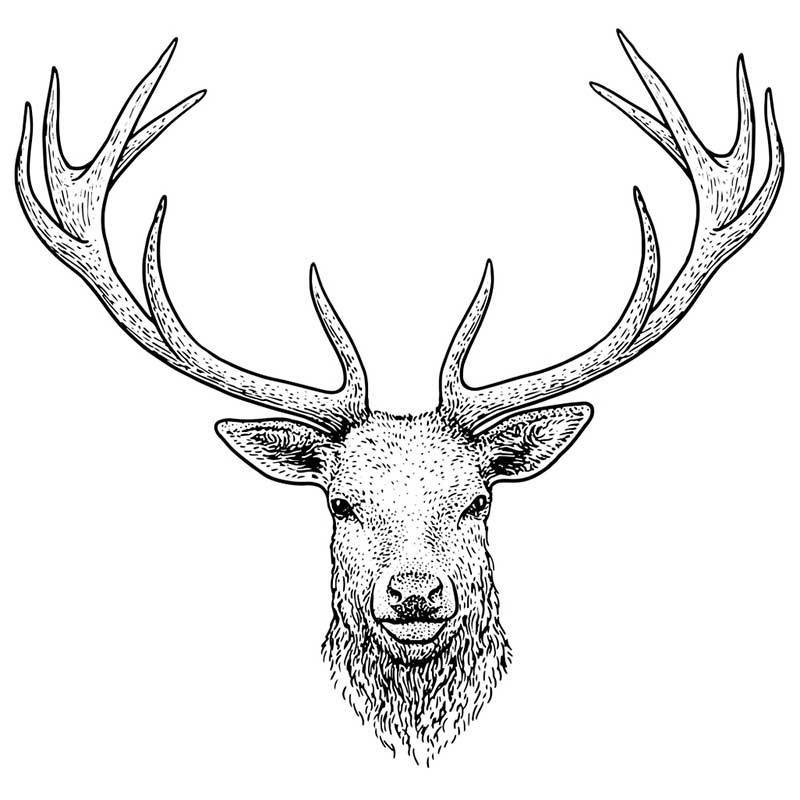Картинки олень для срисовки (18)
