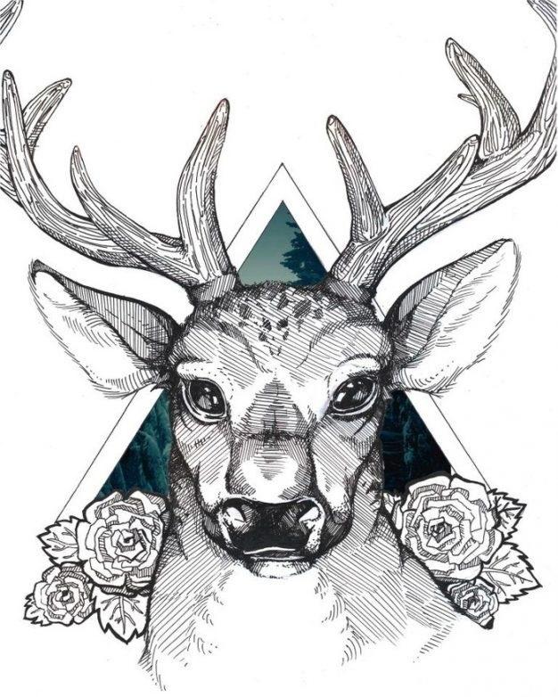 Картинки олень для срисовки (19)
