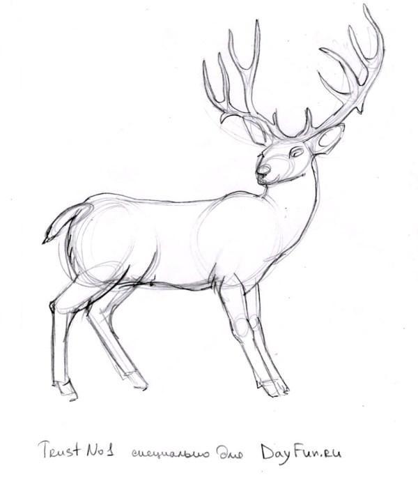 Картинки олень для срисовки (21)
