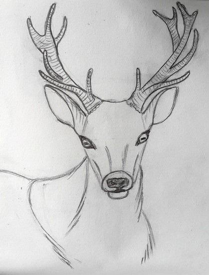 Картинки олень для срисовки (28)
