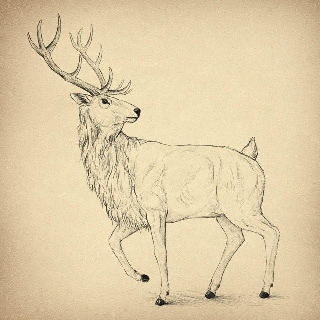 Картинки олень для срисовки (29)