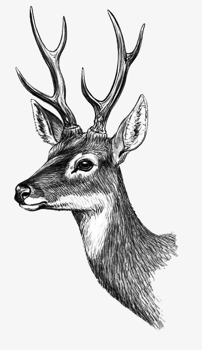 Картинки олень для срисовки (4)