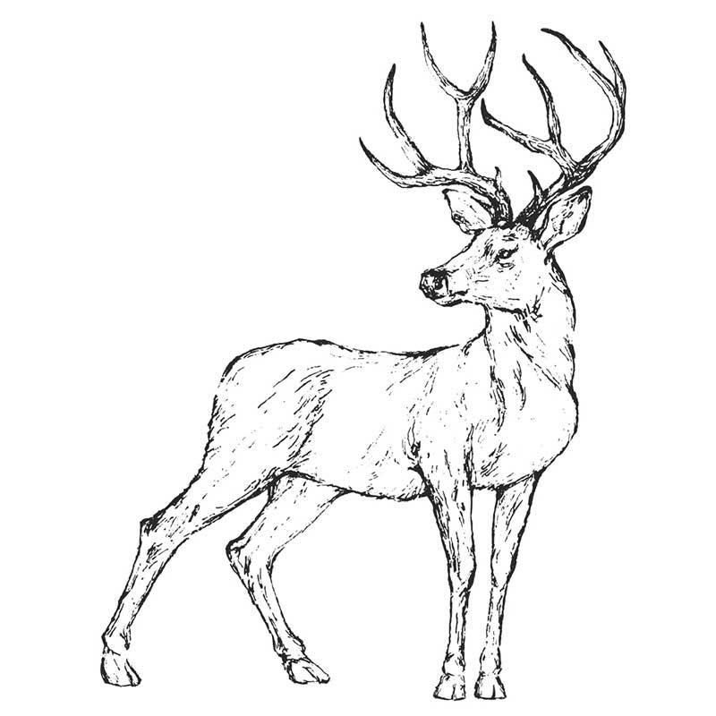 Картинки олень для срисовки (5)