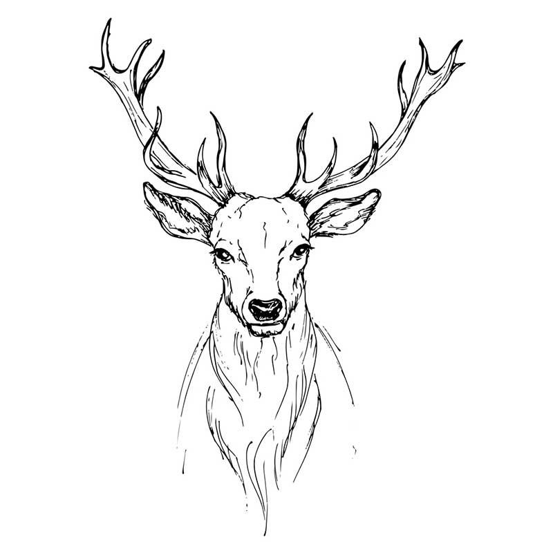 Картинки олень для срисовки (7)