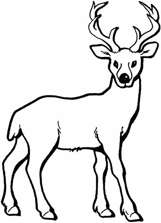 Картинки олень для срисовки (9)