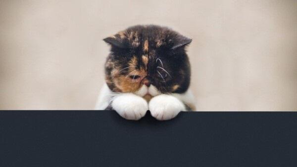 Невероятные срисовки котят (11)