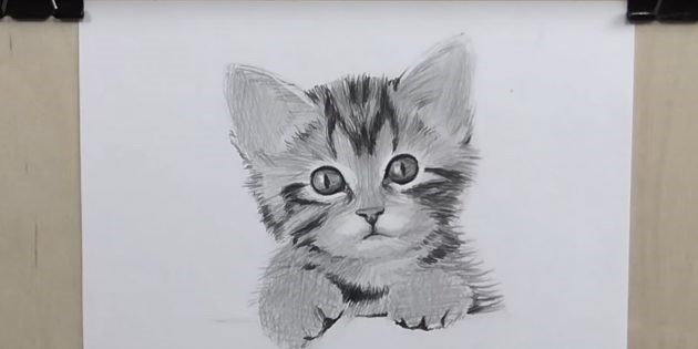 Невероятные срисовки котят (9)