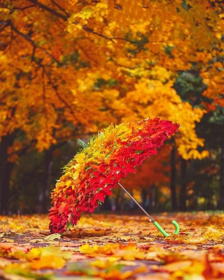 Доброе утро осень и дождь   прекрасные картинки (18)