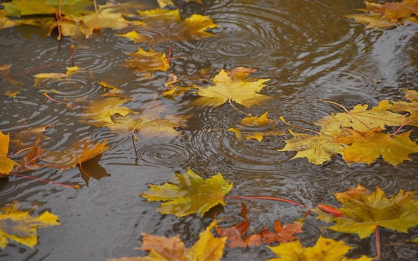 Доброе утро осень и дождь   прекрасные картинки (8)