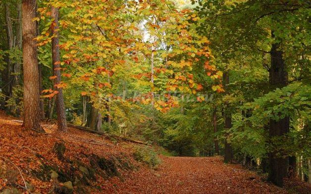 Осень в лесу красивые картинки для детей и родителей (1)